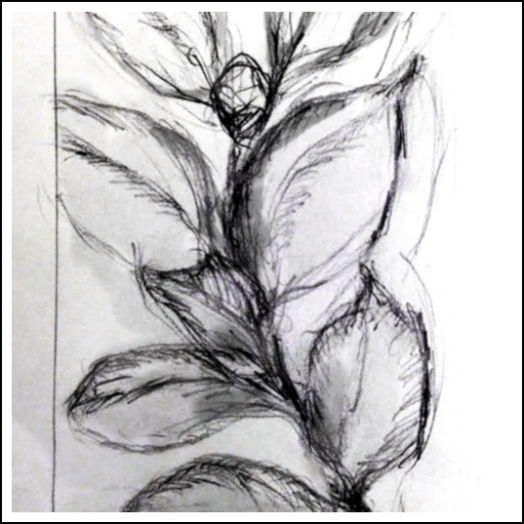 Class Image Explorations in Drawing