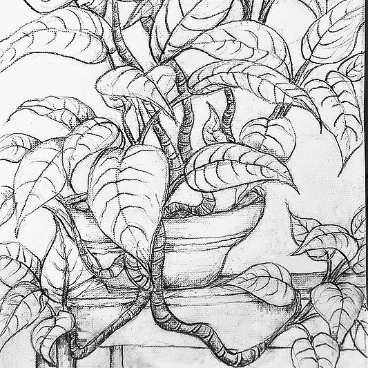 Class Image Drawing: Potted Plant Portraiture