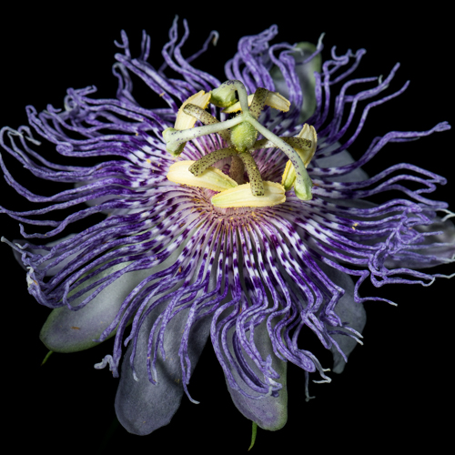 Class Image B. *NEW* Intro to Flower Photography